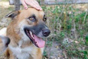 犬とハーブで幸せ暮らしVol.2-6 | Fanimal(ファニマル)