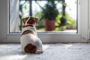 ペットの分離不安症について | Fanimal(ファニマル)