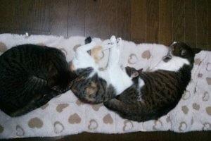 猫伝染性腹膜炎2 | Fanimal(ファニマル)
