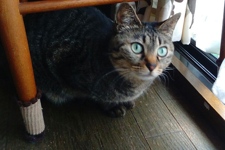 猫伝染性腹膜炎4 | Fanimal(ファニマル)