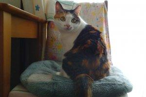 猫伝染性腹膜炎3 | Fanimal(ファニマル)