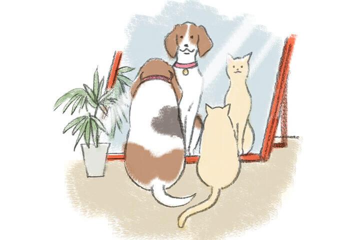 鏡の前の犬と猫