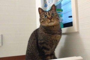 猫の尿石症1 | Fanimal(ファニマル)