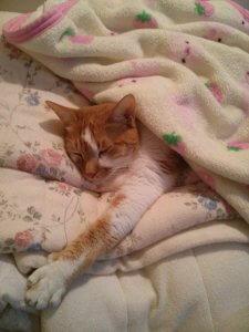猫の尿石症2 | Fanimal(ファニマル)