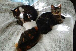 猫の尿石症3 | Fanimal(ファニマル)