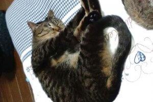 猫の尿石症4 | Fanimal(ファニマル)