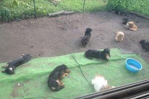 愛犬がご飯を食べてくれない3 | Fanimal(ファニマル)