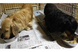 愛犬がご飯を食べてくれない2 | Fanimal(ファニマル)