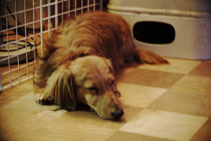 愛犬がご飯を食べてくれない 困った時にやってみて欲しいこと