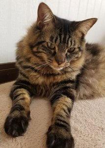 猫の爪切り5 | Fanimal(ファニマル)