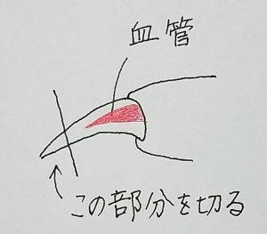 猫の爪切りイラスト | Fanimal(ファニマル)