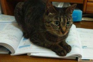 猫パルボウィルス感染症3 | Fanimal(ファニマル)