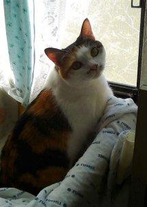 猫パルボウィルス感染症2 | Fanimal(ファニマル)