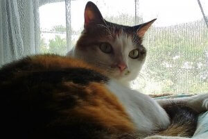 猫カリシウィルス感染症4 | Fanimal(ファニマル)