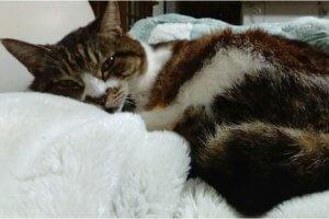 猫カリシウィルス感染症1 | Fanimal(ファニマル)