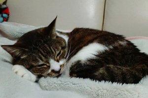 猫の回虫症3 | Fanimal(ファニマル)