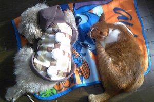 猫ひっかき病1 | Fanimal(ファニマル)