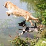 愛犬と川遊びができる関東の新穴場スポット5選