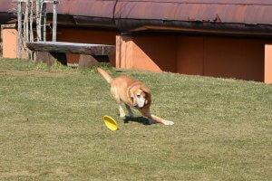 犬のしっぽの動きと気持ち2 | Fanimal(ファニマル)