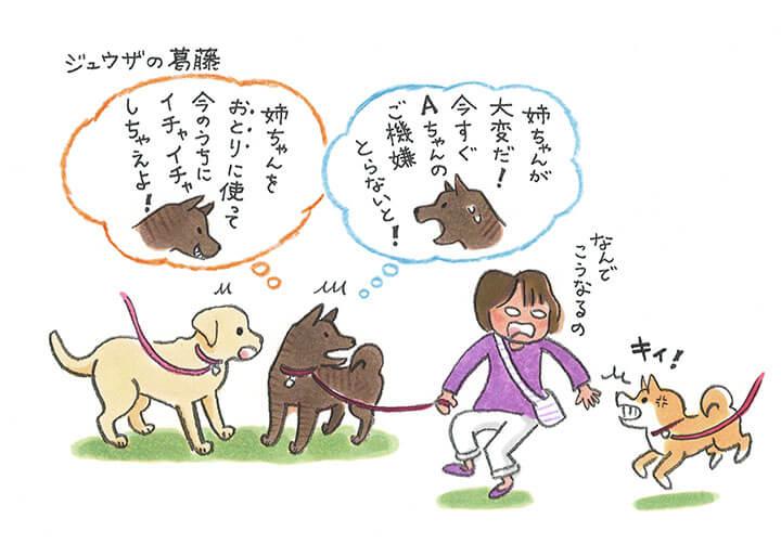 ジュウザのびっくり事件簿 柴犬あるある① | Fanimal(ファニマル)