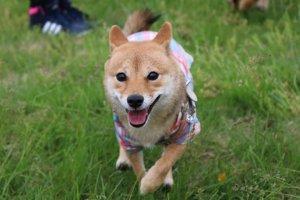 日本犬祭1 | Fanimal(ファニマル)