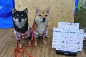 日本犬祭6 | Fanimal(ファニマル)