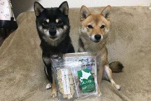 日本犬祭8 | Fanimal(ファニマル)