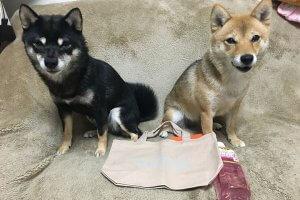 日本犬祭5 | Fanimal(ファニマル)