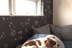 Vol.5 犬と暮らすための家6 | Fanimal(ファニマル)