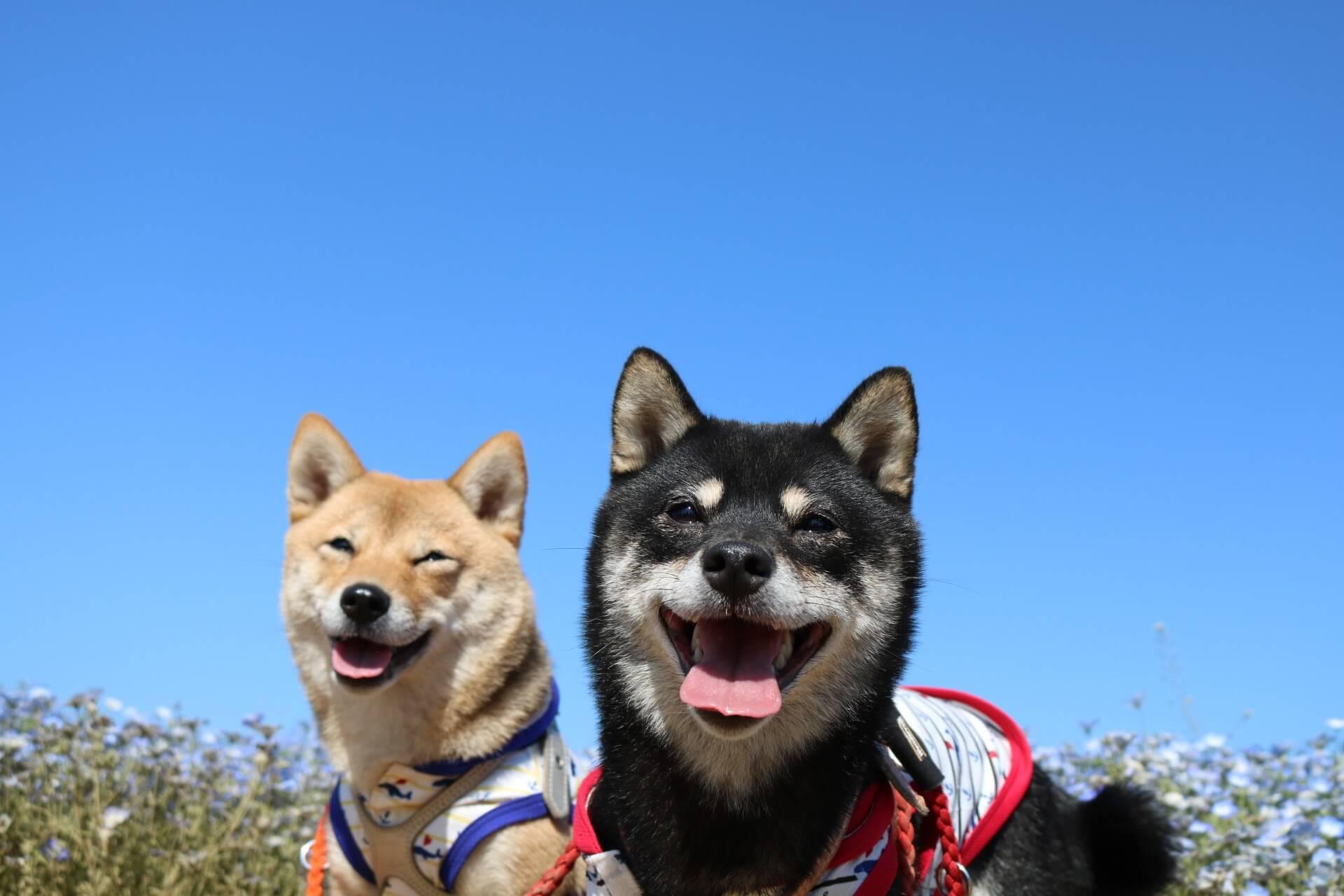 ももうなお出かけコーナー 日本犬祭~NIPPON DOGS CARNIVAL 2017~