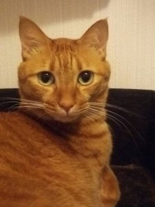 猫の流涙症2 | Fanimal(ファニマル)