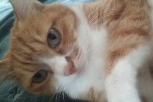 猫の流涙症3 | Fanimal(ファニマル)