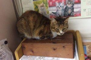 猫の流涙症4 | Fanimal(ファニマル)