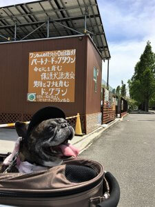~花博記念公園鶴見緑地はお花がいっぱい~15 | Fanimal(ファニマル)