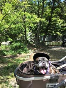 ~花博記念公園鶴見緑地はお花がいっぱい~9 | Fanimal(ファニマル)