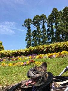 ~花博記念公園鶴見緑地はお花がいっぱい~2 | Fanimal(ファニマル)