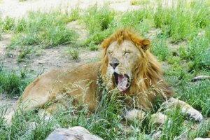 動物園の楽しみ方第3回 生態編2 | Fanimal(ファニマル)
