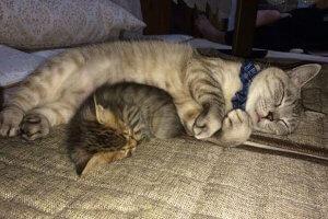 猫の心臓病について知ろう1 | Fanimal(ファニマル)