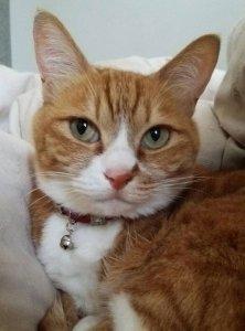 猫の心臓病について知ろう2 | Fanimal(ファニマル)