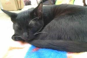 猫の心臓病について知ろう3 | Fanimal(ファニマル)