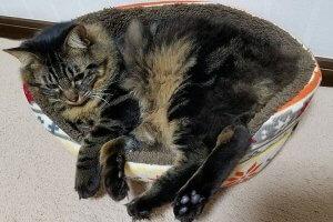 猫におすすめのベッド1 | Fanimal(ファニマル)