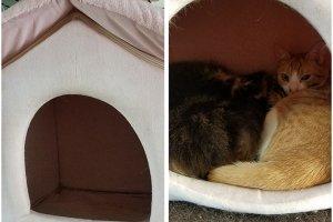 猫におすすめのベッド2 | Fanimal(ファニマル)