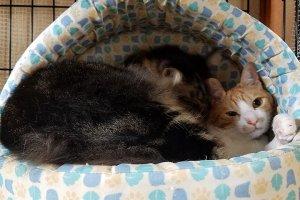 猫におすすめのベッド3 | Fanimal(ファニマル)