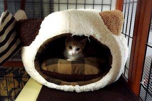 猫におすすめのベッド6 | Fanimal(ファニマル)