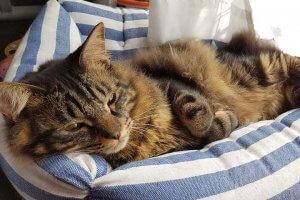 猫におすすめのベッド7 | Fanimal(ファニマル)
