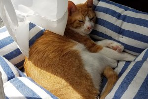 猫におすすめのベッド11 | Fanimal(ファニマル)