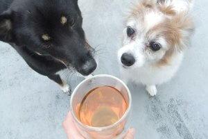 ハーブティーを飲む犬