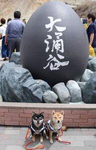 箱根 大涌谷で記念撮影の豆柴