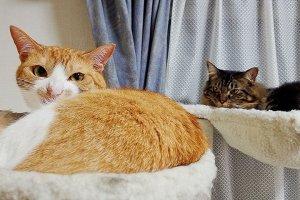 キャットタワーでくつろぐ猫たち