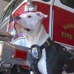 火事から生還し消防署のマスコット犬になった子犬のジェイク